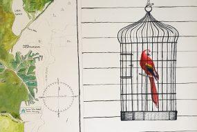 main-image-parrot